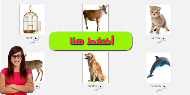 Photo of مفردات – أسماء الحيوانات باللغة الدنماركية